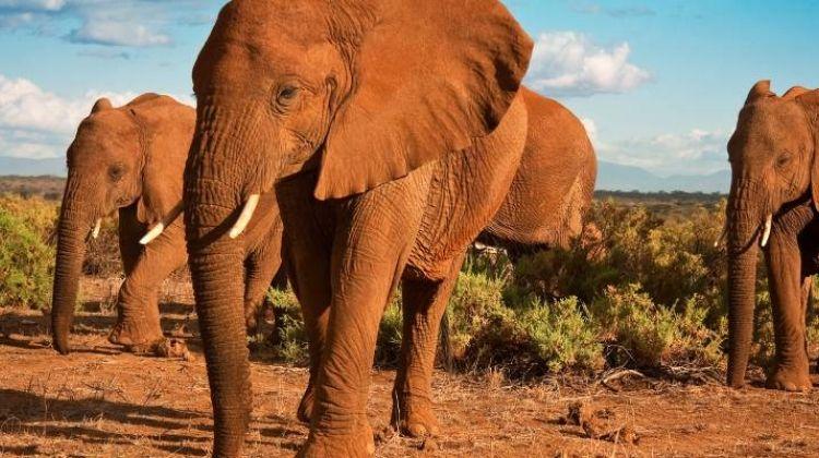 Tanzania Wildlife Week - 7 days
