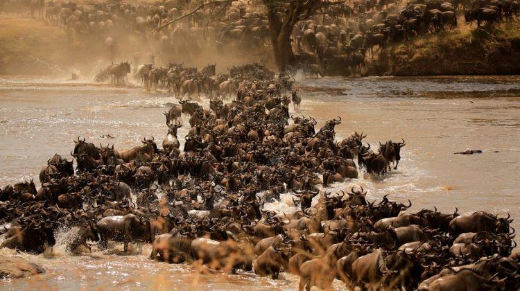Tarangire, Ngorongoro Crater & Lake Manyara Safari