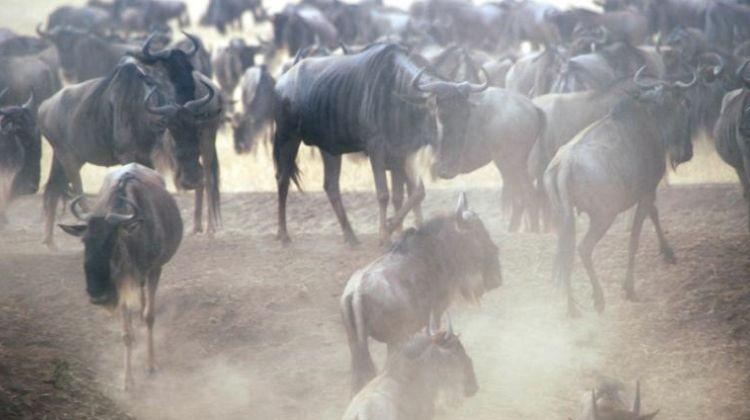 The 6 Days Great Migration Safari Ndutu - Dec to Mar