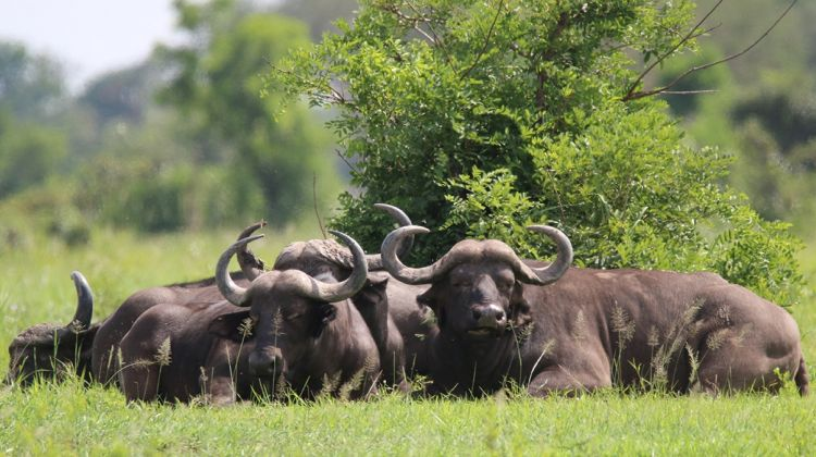 The Adventure in Ruaha National Park