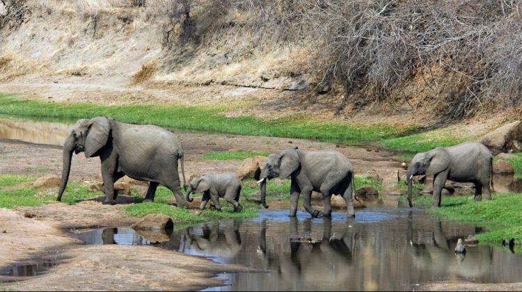 The Best of Tanzania Southern Circuit Safari