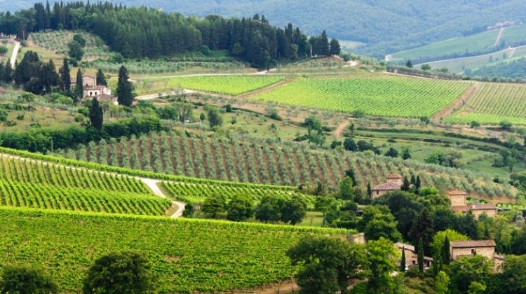 The Chianti Classico with Wine Tastings and Dinner