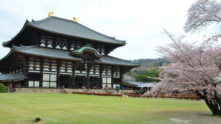 The Golden Route Japan: Cherry Blossom Tour