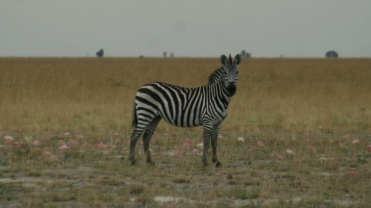 The Kokomo Safari - 17 nights / 18 days safari