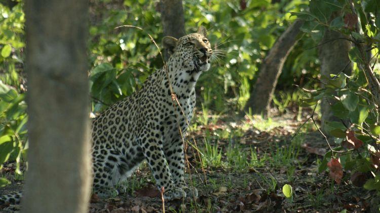 The Kwalata Safari - 7 nights / 8 days Safari