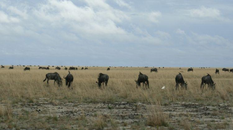 The Pizi Safari - 11 nights / 12 days safari