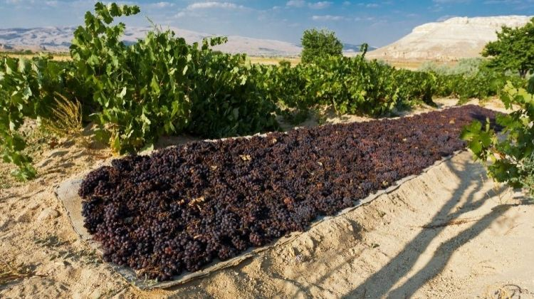 The Red Valley Wine Tour