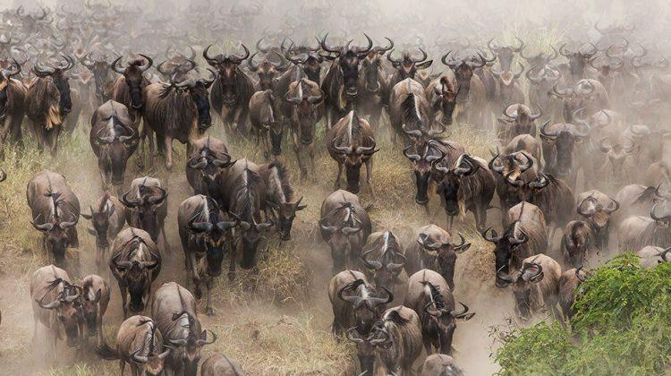 The Serengeti Wildebeest Migration Safari