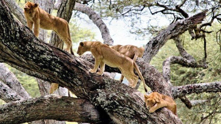 Three-Day Small-Group Safari: Tarangire, Manyara & Ngorongoro