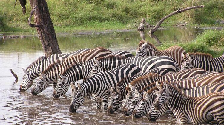 Three Days in Serengeti: Group Safari