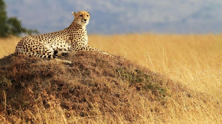 Through The Rift Valley, Keekorok Lodges