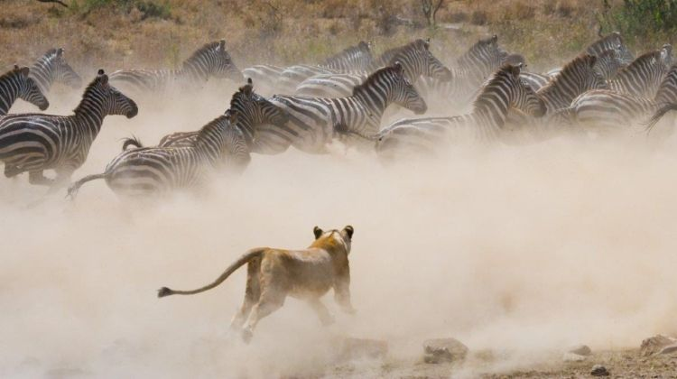 Through The Rift Valley, Serena Lodges