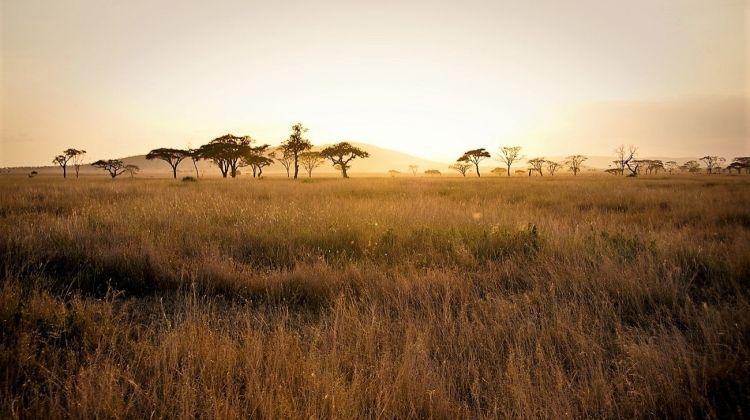 Timeless Tanzania Lodge 7 Days
