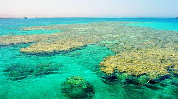 Tiran Island By Boat By Dahab Safari Day Tours Bookmundi