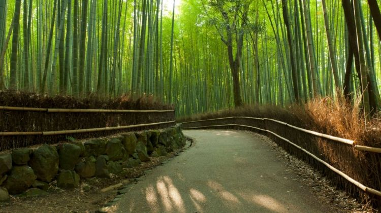 Tokyo to Osaka by Rail - Private Tour