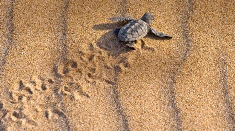 Tortuguero National Park Tour – 4-Day Independent Adventure
