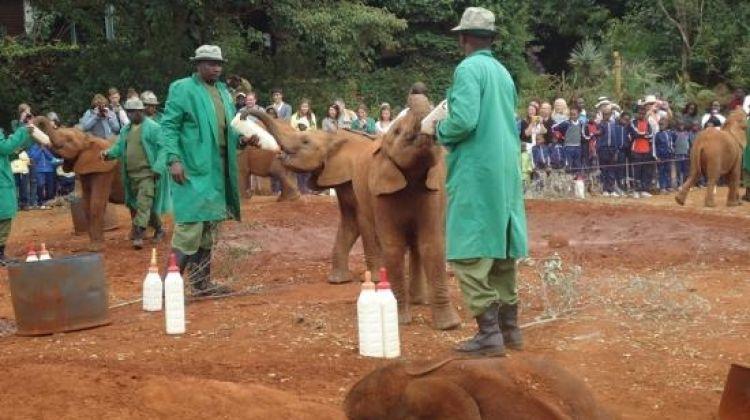 Tour Giraffe Center & Elephant Orphanage From Nairobi