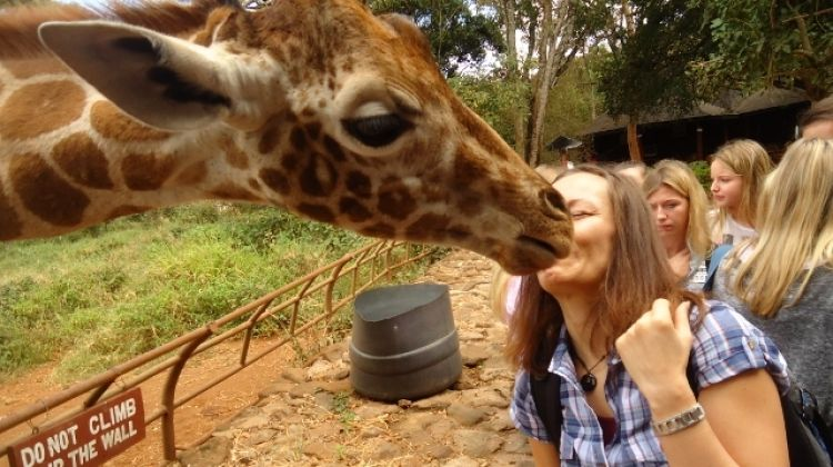 Tour Giraffe Center & Elephant Orphanage From Nairobi