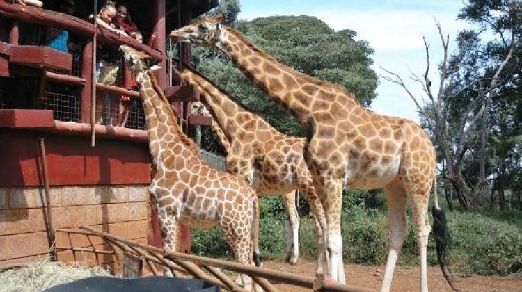 Tour Karen Blixen & Giraffe Center From Nairobi