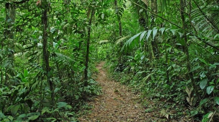 Tropical Rainforest and Chocolate Adventure