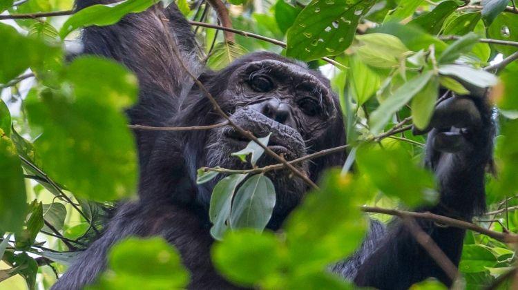 Uganda Expedition: Rhinos, Falls & Chimps