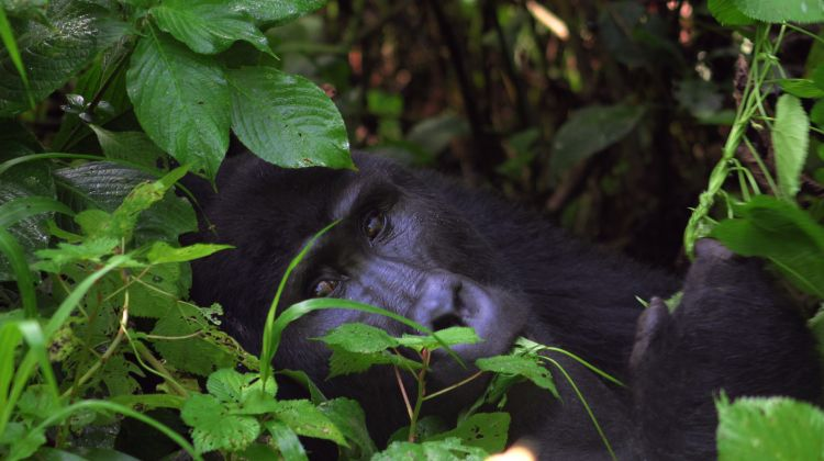 Uganda Wildlife Holiday: 8 Days