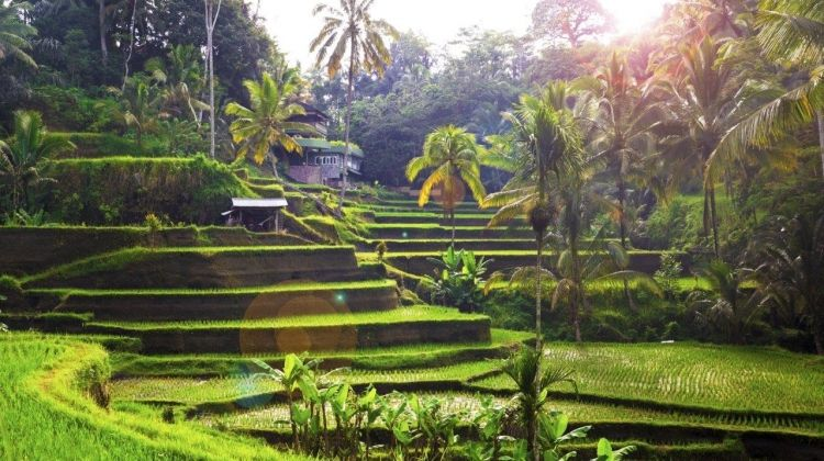 Unforgettable Bali, Private Tour