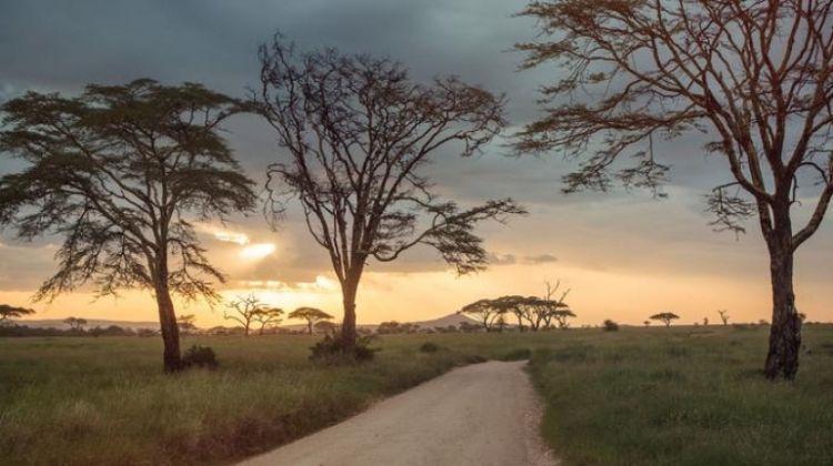 Upgraded East Africa Safari