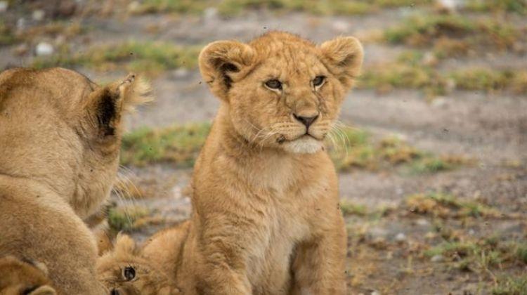 Upgraded Tanzania Safari