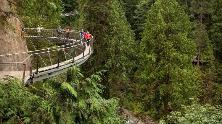 Vancouver City + Capilano Suspension Bridge Park Tour