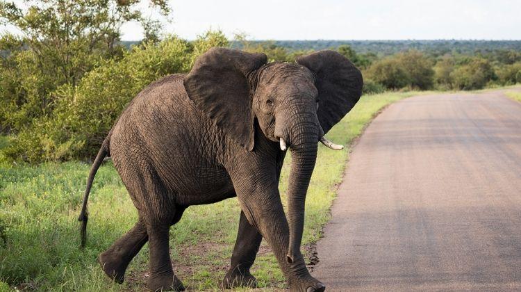 Vic Falls to Kruger