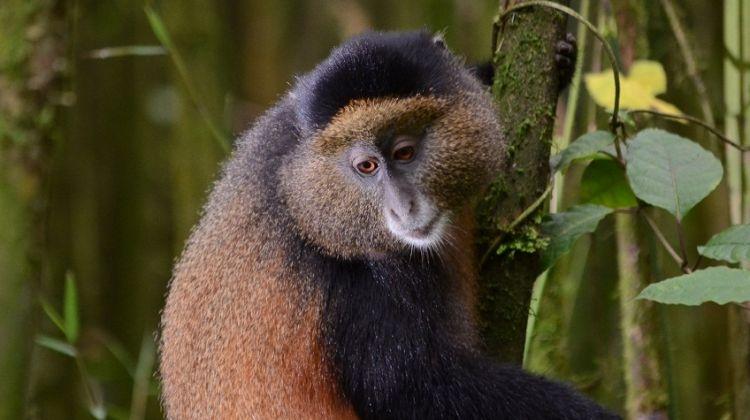 Virunga Primates and Mafia Island
