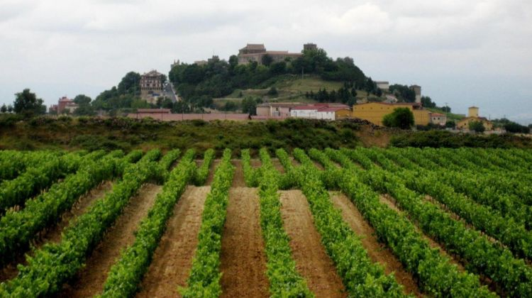 Vitoria & Rioja Area Wine Tour