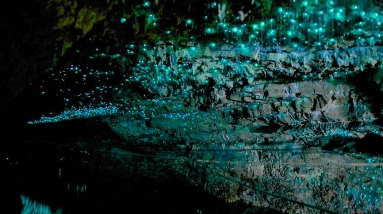 Waitomo Glowworm Caves Experience