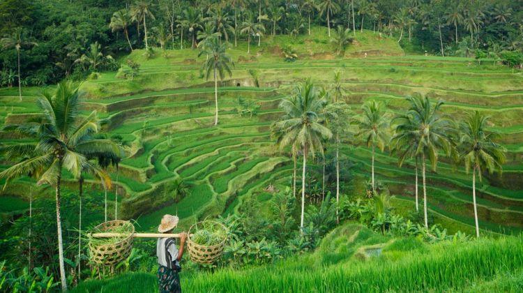 Wanderlands Bali Tour