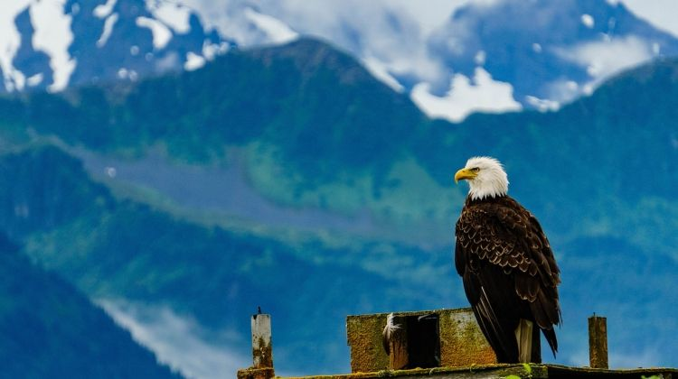Wild Alaska & British Columbia