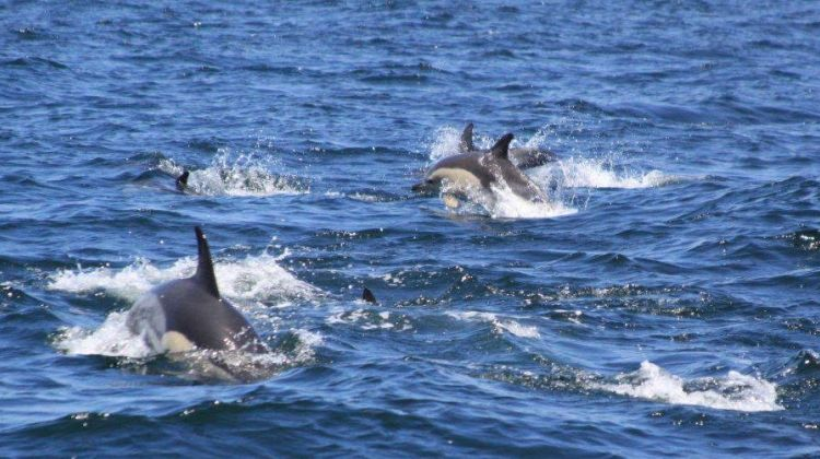 Wild Dolphins Experience - Dolphins and Coastline