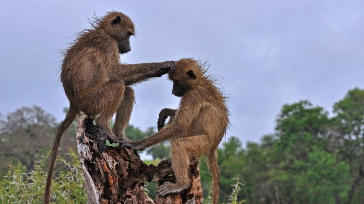 Wildlife Safari and Zanzibar Beach Holidays