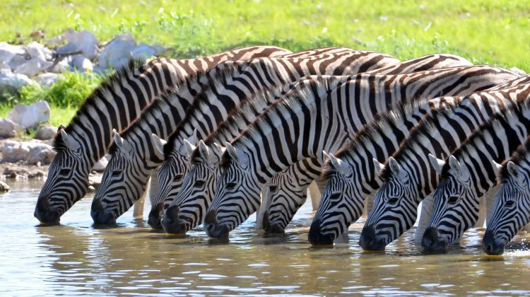 Wildlife Safari at Aquila Private Game Reserve -Cape Town