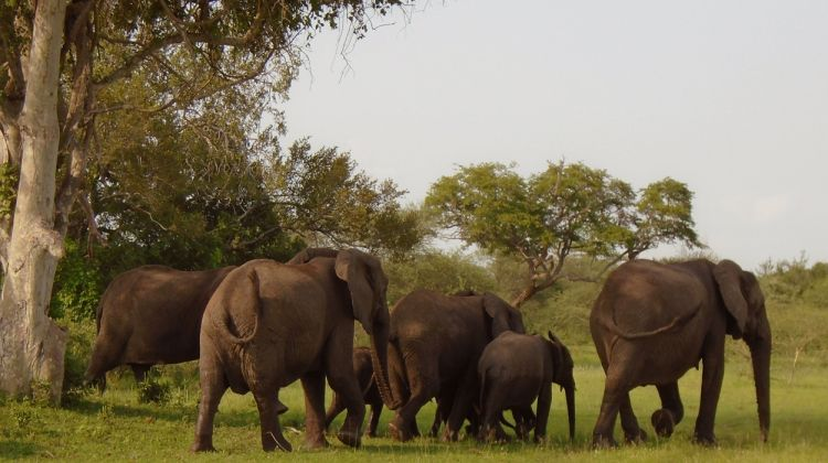 Wildlife Safari In Selous  Game Reserve