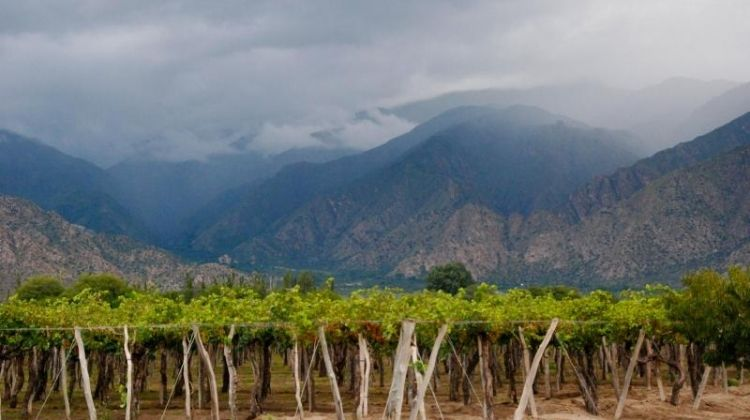 Wine Route from Salta