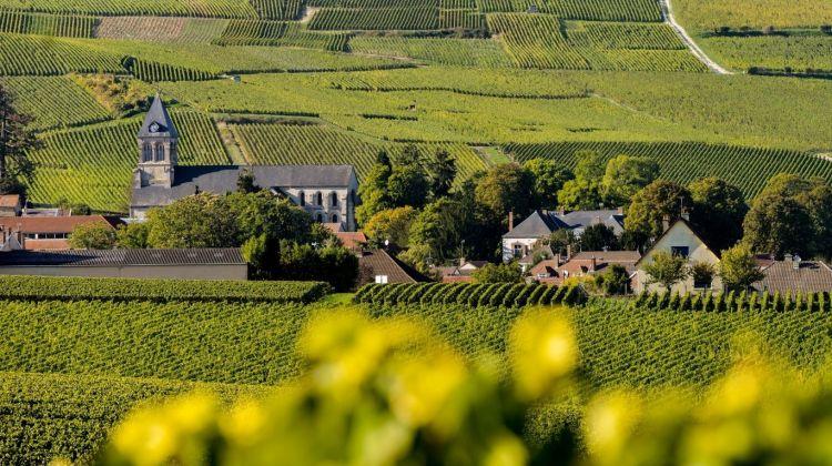 Wine Tasting in the Champagne Region