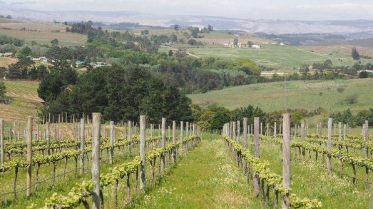 Wine-Tasting Tour in Elgin