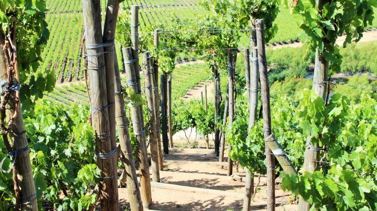 Wine Tour at Emiliana & Bodegas Re