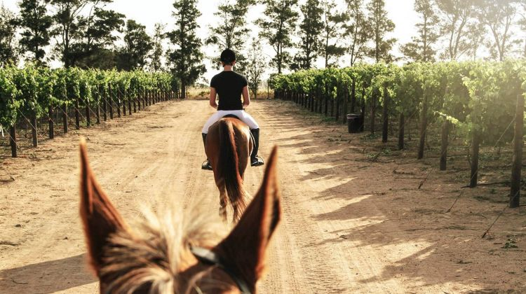 Winelands Equestrian Adventure