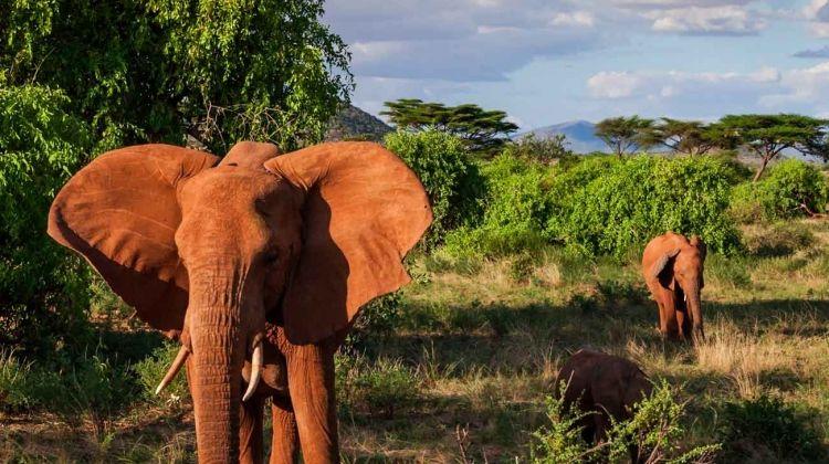 Wonders of Kenya
