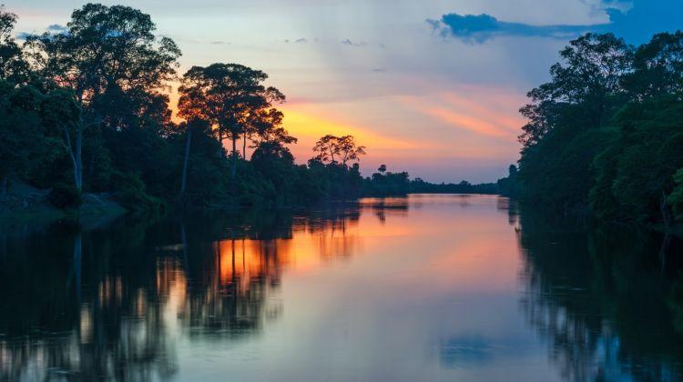 Yasuní Rainforest: Napo Wildlife Center