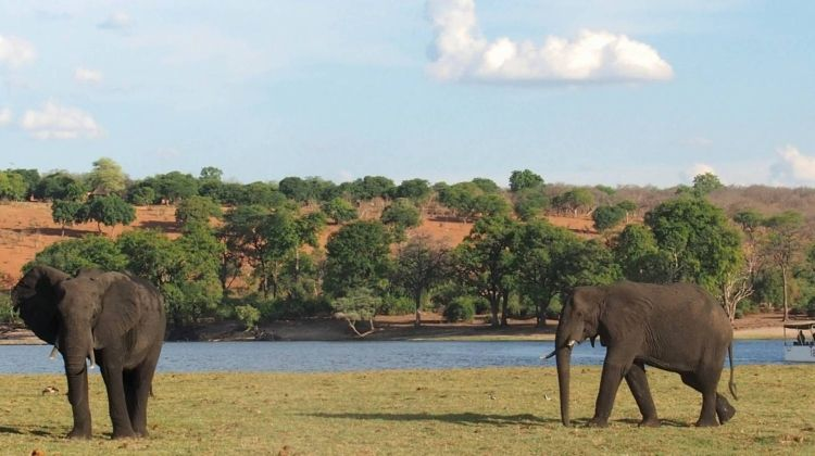 Zambia Liuwa Plains Migration Safari