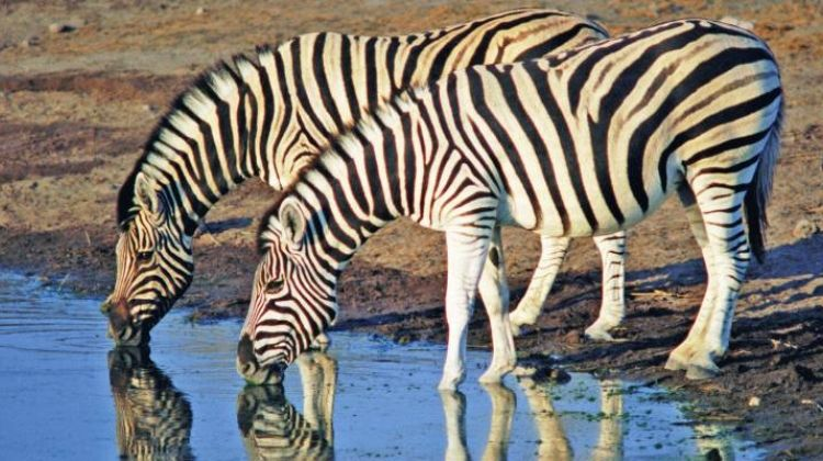 Zebras & Zanzibar - 11 days