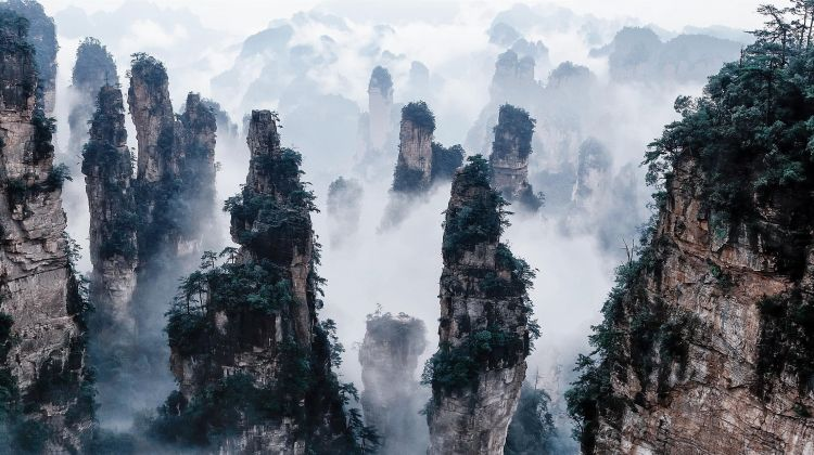 Zhangjiajie National Forest Park Day Tour